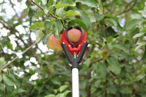 cueilloir fruits téléscopique