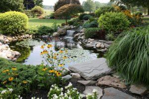 bassin jardin plantes