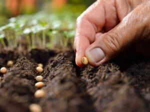 conservation graines septembre