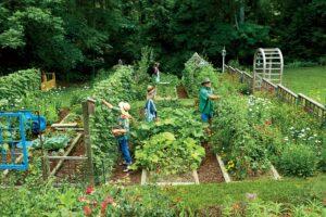 légumes potager septembre