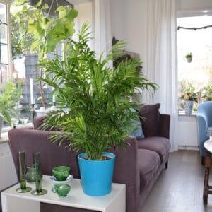 palmier pot maison