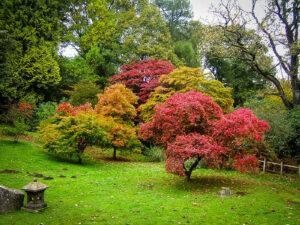 planter arbre jardin