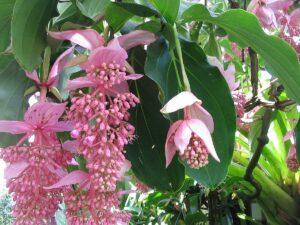 plantes intérieur décoratives
