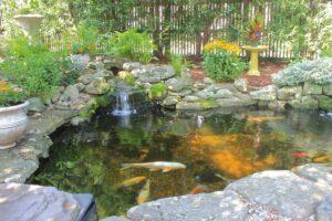 poissons bassin jardin